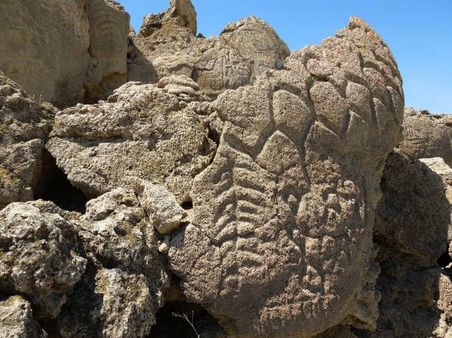 The ancient carvings on these limestone boulders in northern Nevada's high desert near Pyramid Lake about 35 miles northeast of Reno have been confirmed to be the oldest recorded petroglyphs in North America, at least 10,500 years old.