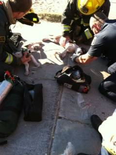 Firefighters resuscitate two puppies who were discovered inside a burning home early Tuesday, Oct. 22, 2013.