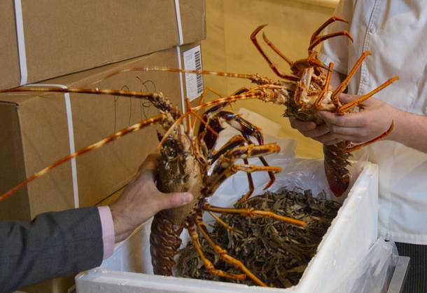 A fresh shipment of spiny lobsters is opened at Milos and will be ready for serving immediately on Wednesday Oct. 23, 2013.