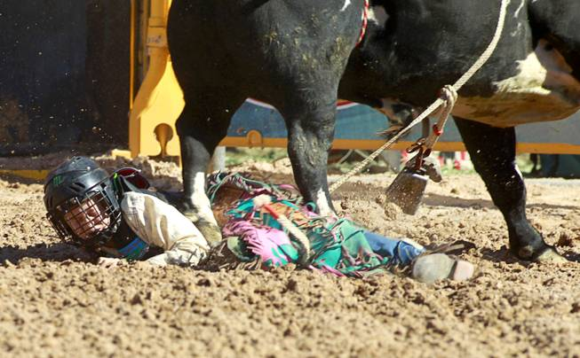 Trevyn Armstrong, 11, gets stepped on by a bull during the Chris Shivers Miniature Bull Riding (MBR) World Finals at Mandalay Bay Thursday, Oct. 24, 2013. The MBR features junior riders ages 8 to11 and senior riders ages 12 to 14. The event was part of the the 2013 Professional Bull Riders Built Ford Tough World Finals.
