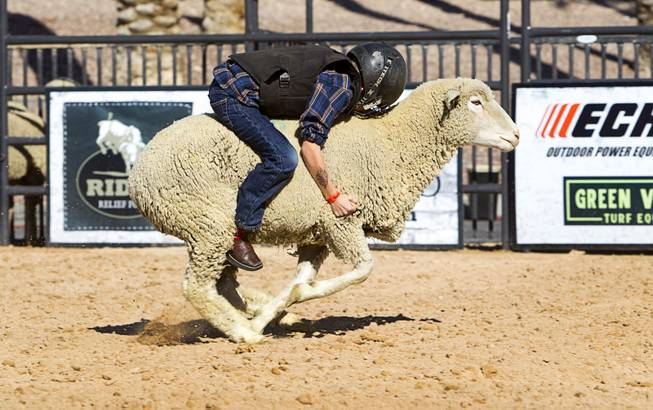 Vance Rupp, 7, of Polk City, Iowa rides a sheep during a Mutton Bustin' competition at the Tyson Fan Zone & Marketplace at Mandalay Bay Thursday, Oct. 24, 2013. Riders must be four to seven years old and weigh 60 lbs. or less. Rupp won the morning competition.The event was part of the the 2013 Professional Bull Riders Built Ford Tough World Finals. Rupp won the morning competition.