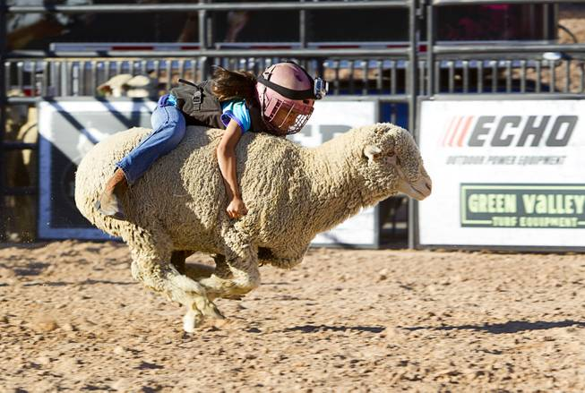 "A ""wool warrior""  holds onto her sheep during a Mutton Bustin' competition at the Tyson Fan Zone & Marketplace at Mandalay Bay Thursday, Oct. 24, 2013. The event was part of the the 2013 Professional Bull Riders Built Ford Tough World Finals."
