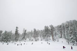 People gather to play in Lee Meadows while snow falls on Mt. Charleston Saturday, Nov. 23, 2013.