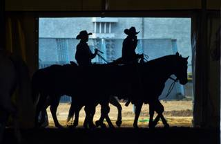 Riders warm down their horses after a roping session for the upcoming NFR at the Thomas & Mack Center on Tuesday,  Dec. 3, 2013.