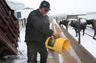 Alton Zenker feeds calves on his ranch Wednesday, Dec. 4, 2013, north of Carson, N.D., as an arctic blast swept across the Northern Plains. Thursdays projected high is minus-6, falling to minus-10 by Saturday, with overnight lows to 24 below as a major winter storm bulldozed from the Rockies eastward. The National Weather Service forecast a foot or more of snow in some areas of the Upper Midwest, with freezing rain possible for parts of the Great Lakes.