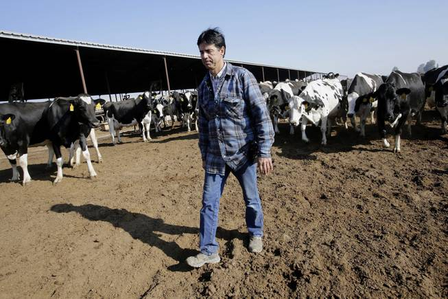 Mike Monteiro walks through the cow pens at Lakeside Dairy in Hanford, Calif., Dec. 12, 2013. A third-generation dairyman, Monteiro is opposed to California's planned high-speed rail project that would connect San Francisco to Los Angeles.