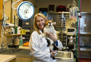 Dr. Trish Auge of A Cat Hospital with patient Barbarella there for kidney issues and more Wednesday, Dec. 18, 2013.