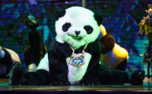 Opening Night of 'Panda!'