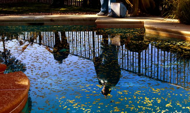 Curtis Murphy of Klean Scoop is reflected in a pool as he joins his fiance Melodie Harris as they clear a yard of dog poop on Wednesday, Jan. 15, 2014.
