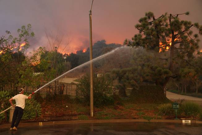 A  homeowner attempts to water down a tree on his property while a wildfire burns in the hills just north of the San Gabriel Valley community of Glendora, Calif., on Thursday, Jan 16, 2014.