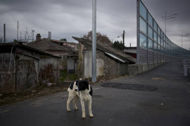 In this photo taken on Wednesday, Nov., 27, 2013, a dog walks on the pavement separating a federal house and the 5a Akatsiy street's house in the village of Vesyoloye outside Sochi, Russia.