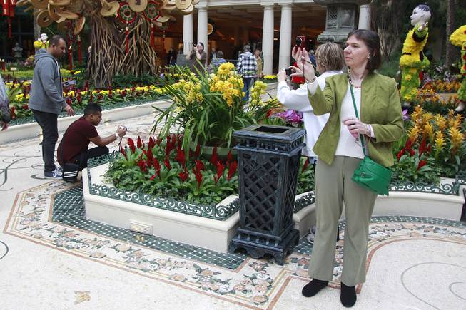 People take photos of the Bellagio Conservatory & Botanical Gardens which is decorated for the Chinese New Year Thursday, Jan. 30, 2014.