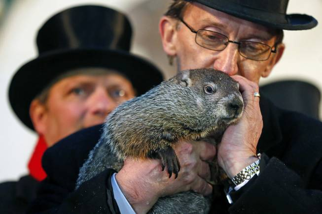 Punxsutawney Phil is held by Ron Ploucha after emerging from his burrow Sunday, Feb. 2, 2014, on Gobblers Knob in Punxsutawney, Pa., to see his shadow and forecast six more weeks of winter weather. The prediction this year fell on the same day as Super Bowl Sunday.