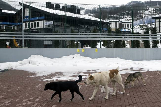 Stray dogs sit outside the Rosa Khutor Extreme Park course, a venue for the snowboarding and freestyle competitions of the 2014 Winter Olympics, in Sochi, Russia, on Monday, Feb. 3, 2014.