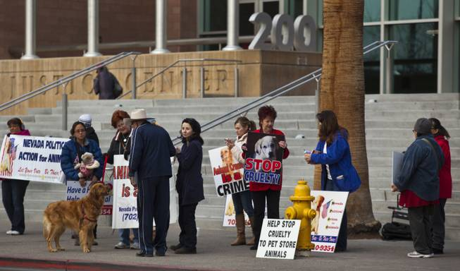 Protestors with Nevada Political Action for Animals rally outside the Clark County Justice Center prior to an appearance by Gloria Lee on Wednesday, Feb. 5, 2014.  Lee is accused of arson and animal cruelty in connection with a fire at her pet store, Prince and Princess Pet Boutique.