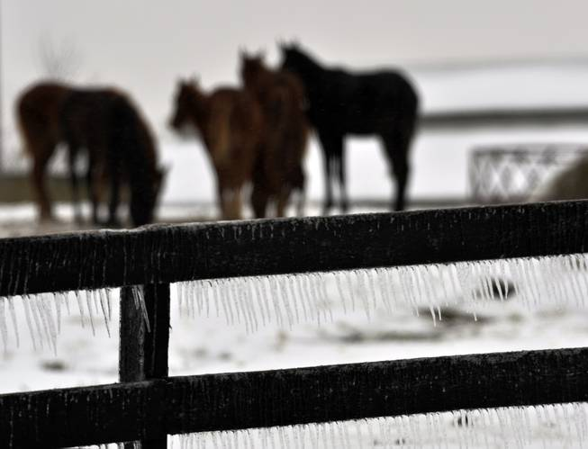 Icicles hang from a fence as horses gather to feed and keep warm in the early morning hours Wednesday, Feb. 5, 2013, in Crestwood, Ky. The Louisville area received between a quarter and a half inch of freezing rain vernight.
