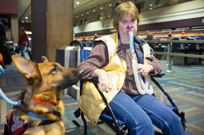 Amy Graves, accompanied by her service dog, Kharma, check in at McCarran International Airport and await their flight to Fort Lauderdale, Fla., Thursday Feb. 5, 2014.  Graves, who suffers from muscular dystrophy, was refused a seat by Virgin Air on her original flight because of her ventilator.