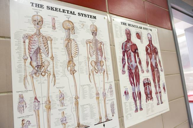 A diagram of the skeletal and muscular system on the wall of the autopsy room at the Clark County Coroner's Office Thursday, Feb. 13, 2014.