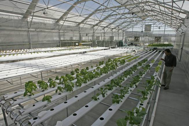 Hydroponics, a method of growing plants in water instead of soil, can bring farming into the urban areas where consumers are concentrated.