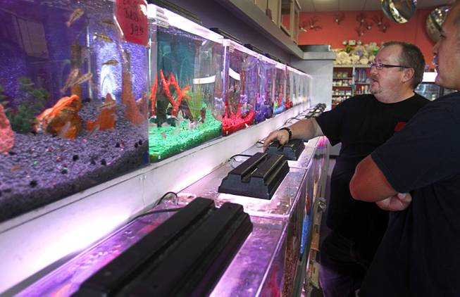 Dan Riggs, owner of Trop-Aquarium, helps a customer in his tropical fish store at 3125 E. Tropicana Ave. Tuesday, Feb. 18, 2014. His business suffered as the shopping center went into decline but now the retail center is recovering and adding tenants.