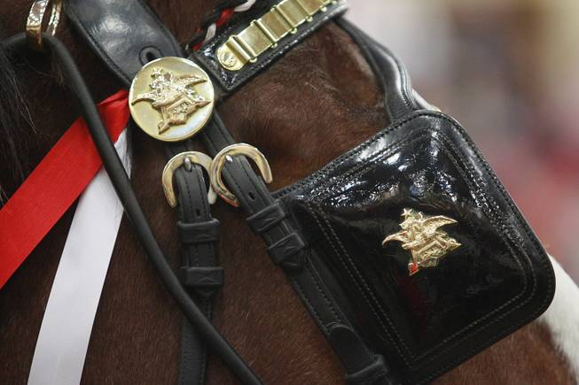 A detail photo of the harness during an appearance of the Budweiser Clydesdales at the South Point Arena Thursday, Feb. 20, 2014.