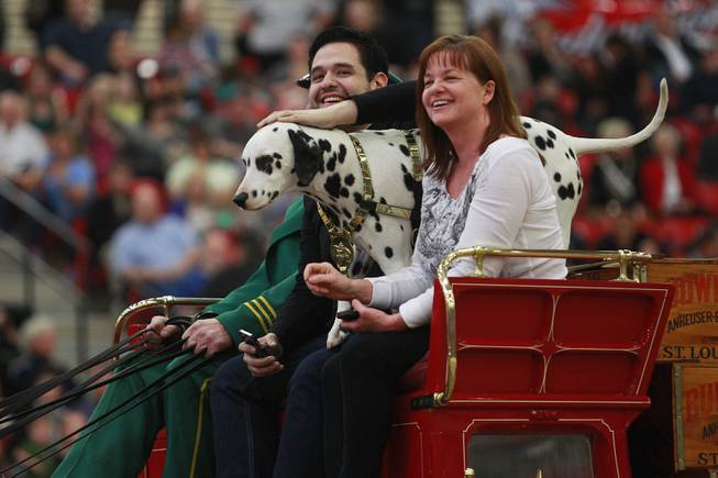 Radio contest winners Alex Lozano and Toni Ramey sit with King the Dalmatian on top of the beer wagon during an appearance of the Budweiser Clydesdales at the South Point Arena Thursday, Feb. 20, 2014.