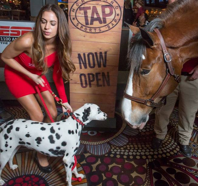 Carter the Clydesdale and Chip the Dalmatian at Tap Sports ...