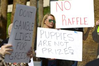 Animal advocate Cherl Prater, center, protests a raffle plan for rescued puppies outside the Regional Justice Center Wednesday, March 5, 2014. The puppies, rescued during a fire at the Prince and Princess Pet Shop on Jan. 27, will be raffled off under a plan announced Tuesday.
