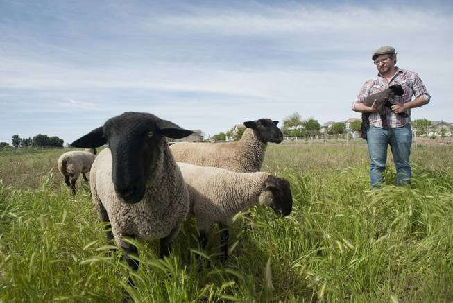 Erich Schultz, head farmer at Agritopia, with a day-old lamb in Gilbert, Ariz., March 5, 2014. A growing number of residential developments, known as agrihoods, are designed around a working farm instead of a golf course or clubhouse.