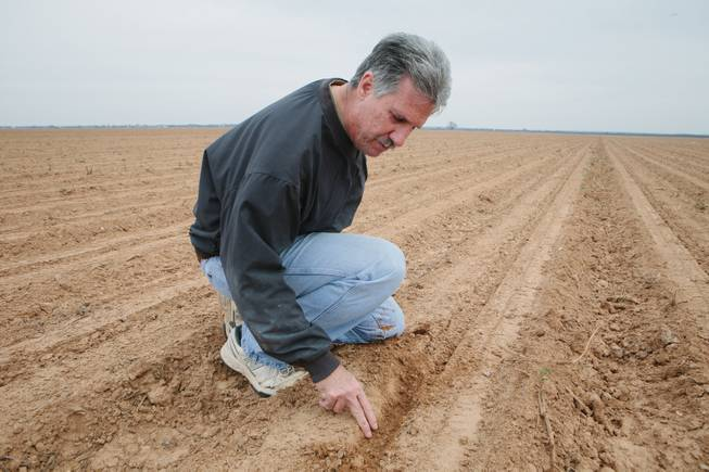 Frank DeStefano, owner of 3-D Farms, who uses water from the Brazos River, on one of his fields in Mumford, Texas, March 12, 2014.