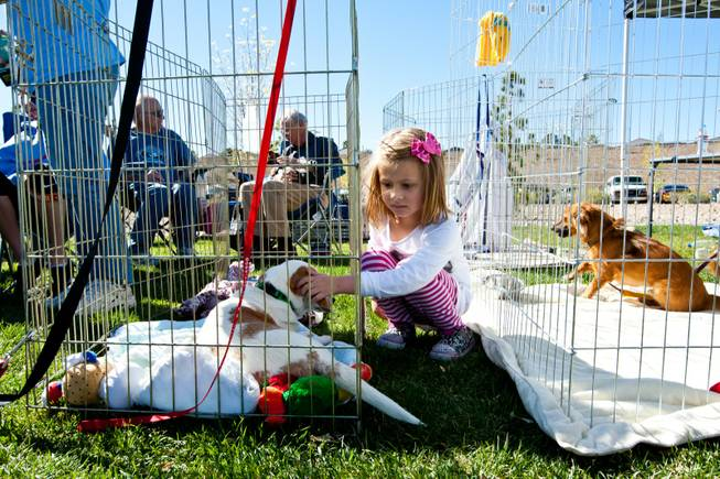 Taylor Hovey, 5, hangs out with her new best friend, who she hopes to adopt, from the Happy Home Animal Sanctuary booth while attending the City of Henderson's 11 Annual Bark in the Park event at Cornerstone Park Saturday, March 8, 2014.