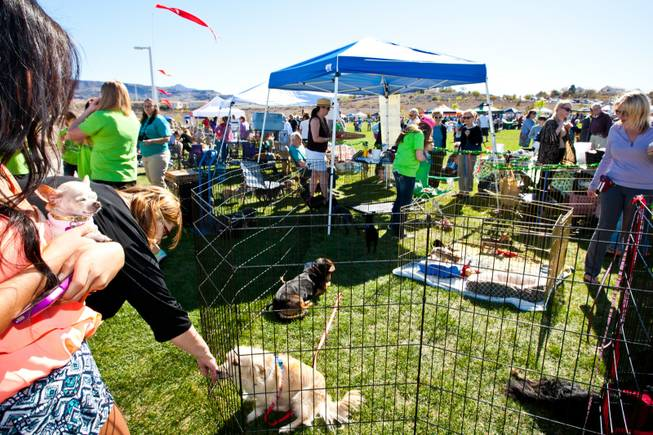 Hundreds of volunteers man the adoption/rescue booths during the City of Henderson's 11 Annual Bark in the Park event at Cornerstone Park Saturday, March 8, 2014.