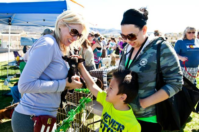 Jodi Simard (left) shows Ilias Frampton, 5, and his mom, Mary, a puppy that is up for adoption while volunteering in the Wagging Tails Rescue booth at the City of Henderson's 11 Annual Bark in the Park event at Cornerstone Park Saturday, March 8, 2014.