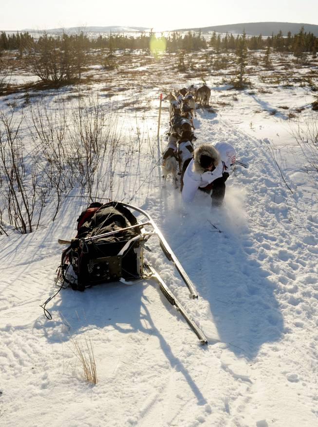 Iditarod musher Aliy Zirkle, from Two Rivers, Alaska, trips as she runs back to her tipped over sled after leading her team to the trail out of Koyuk, Alaska during the 2014 Iditarod Trail Sled Dog Race on Sunday, March 9, 2014.