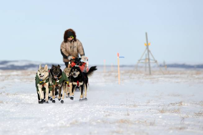 Iditarod musher Jeff King, from Denali, Alaksa, mushes between the checkpoints of White Mountain and Safety, the last checkpoint before the finish line in Nome. King was the first musher to leave the White Mountain checkpoint during the 2014 Iditarod Trail Sled Dog Race on Monday, March 10, 2014.
