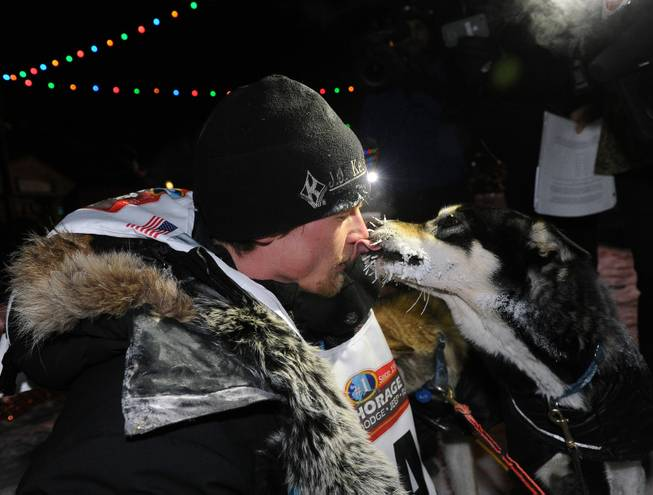 Dallas Seavey gets a kiss from one of his dogs after winning the 2014 Iditarod Trail Sled Dog Race in Nome, Alaska, Tuesday, March 11, 2014.
