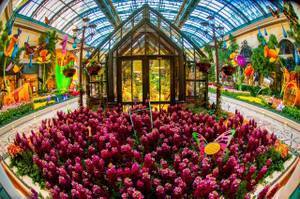 2014 Spring Display at Bellagio