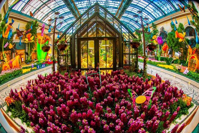 The Bellagio Conservatory & Botanical Gardens Spring 2014 display on ...