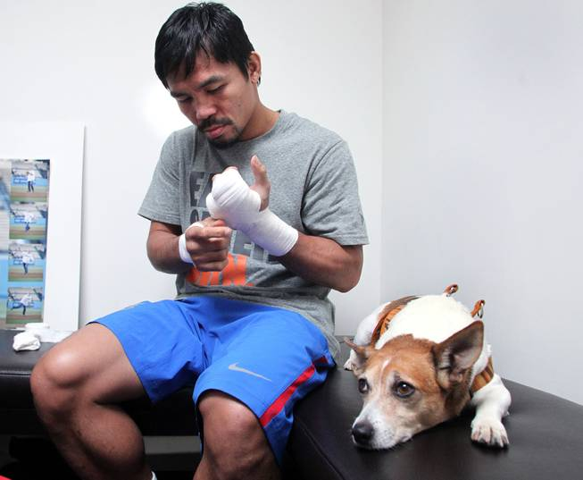 Manny Pacquiao wraps his hands as his dog Pacman watches during training Monday, March 24, 2014 at the Wild Card Boxing Club in Hollywood, Calif. for his eagerly-anticipated rematch against undefeated WBO World Welterweight  champion Timothy Bradley.