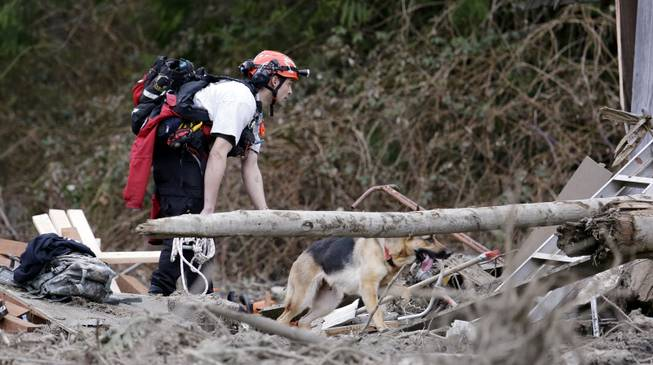 Searcher Shayne Barco and his dog Stratus look through debris following a deadly mudslide, Tuesday, March 25, 2014, in Oso, Wash. At least 14 people were killed in the 1-square-mile slide that hit in a rural area about 55 miles northeast of Seattle on Saturday. Several people also were critically injured, and homes were destroyed.