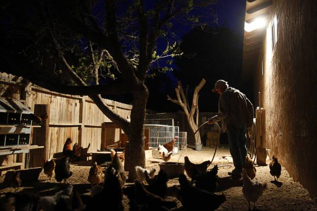 "Before heading to work as a Farmers insurance agent, ""Farmer Glenn"" Linsenbardt gets up before dawn to feed and water the animals at The Farm, 7222 West Grand Teton Drive, Wednesday, March 26, 2014. STEVE MARCUS"