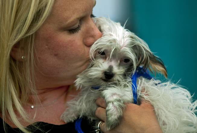 Kristi Liddle kisses her newly adopted puppy Fia at the Animal Foundation on Wednesday, March 26, 2014.  He is a Maltese/Yorkie mix, 1 of 27 puppies rescued during a fire at the Prince and Princess Pet Shop on Jan. 27.