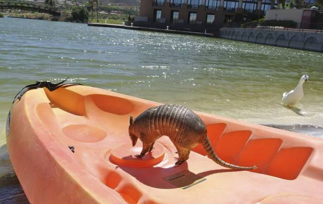 Willie Nelson's missing good luck charm armadillo is photographed on a boat prior to being returned in April 1, 2014.