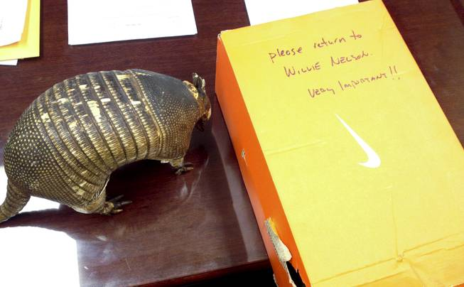 Willie Nelson's missing good luck charm armadillo sits next to the Nike shoe box it was returned in Tuesday, April 2, 2014.