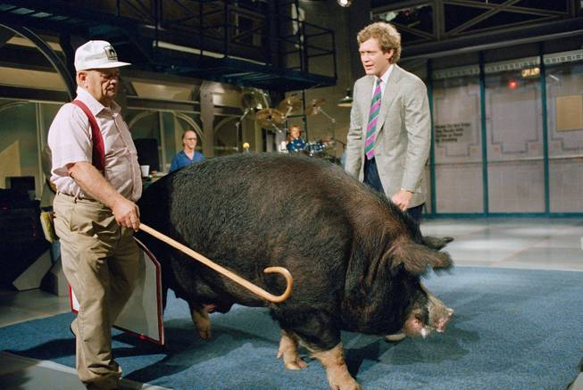 "Farmer Bob Corbett, left, of North Lewisburg, Ohio, shepherds his prize-winning boar named Hog Chief past host David Letterman on the set of NBC's ""Late Night with David Letterman"" in New York, April 24, 1987. The boar, who had lost of few of his 1,205 pounds when he went on the show, is working to set a world weight record for pigs next August."