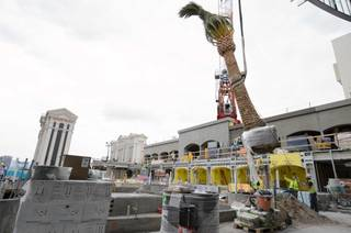 Palm trees are lifted onto Drai's atop the Cromwell at center Strip.