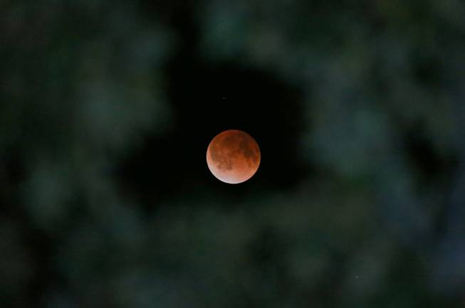 The Earth's shadow is cast over the surface of the moon as a total lunar eclipse is seen though a Magnolia tree top in the sky over Tyler, Texas at 2:57 CDT on Tuesday morning, April 15, 2014. (AP Photo/Dr. Scott M. Lieberman)