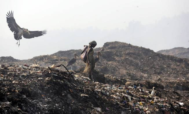 A Greater Adjutant Stork flies by a ragpicker looking for recyclable items at a garbage dump on Earth Day, on the outskirts of Gauhati, India, Tuesday, April 22, 2014. People across the globe hold events to celebrate the Earth's environment and spread awareness on how to conserve its natural resources on Earth Day, observed annually on April 22.