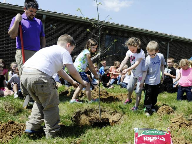 First-graders at Henderson's Cairo Elementary, as part of a service learning project and Earth Day celebration, place handfuls of dirt around a oak tree they planted at the school Tuesday, April 22, 2014, in Henderson, Ky.