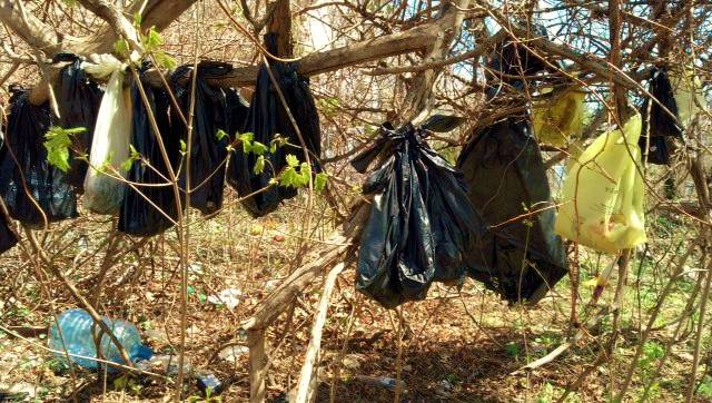 In this April 24, 2014, photo provided by the SPCA of Westchester's Humane Law Enforcement Division, plastic bags containing the remains of about 25 cats are hanging from a tree in a wooded area in Yonkers, N.Y.